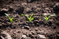 Fields are 95% Planted — Happiness Reigns