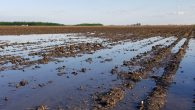 Muddy Fields Cause Slow Planting Completion Again This Year