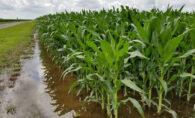Crops Getting Plenty of Rain