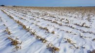 How Are 200-bushel Corn and 65-bushel Beans Not Good?