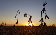 Still Some Corn & Soybeans in the Fields – Taking a Break From Wet Fields