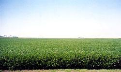 Brandenburg Farms field