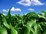Crops Look Good!!
